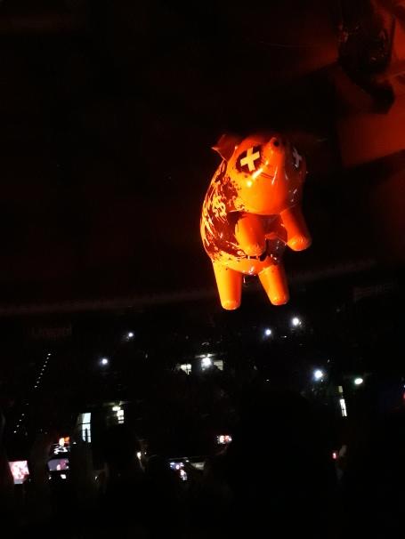 Maialae volante al concerto di Bologna